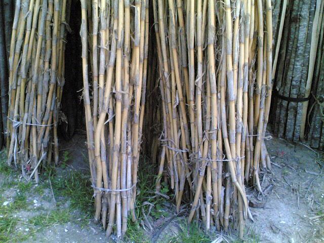 canne-bambu-2