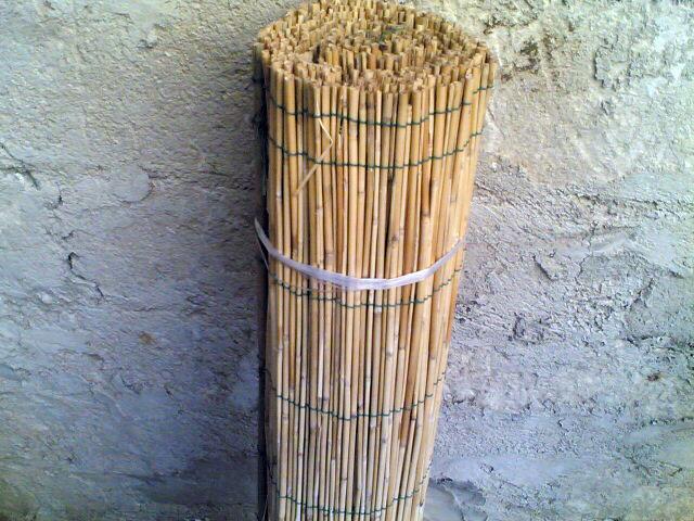 canne-bambu